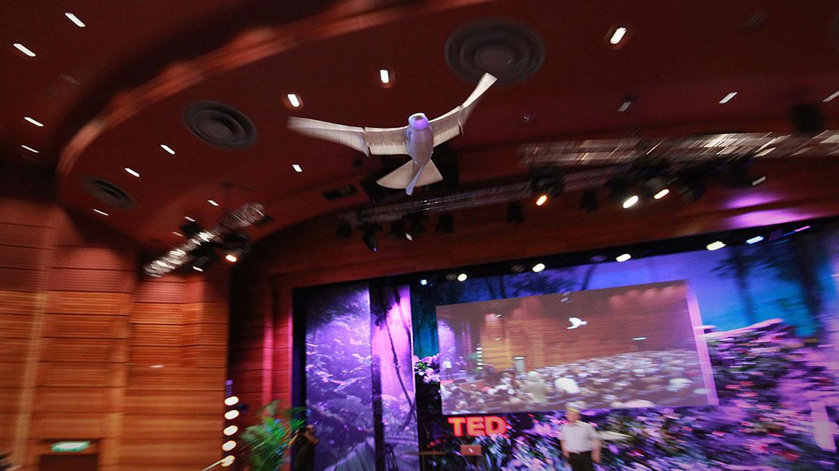 سخنرانی تد : یک روبات که مانند یک پرنده پرواز می کند