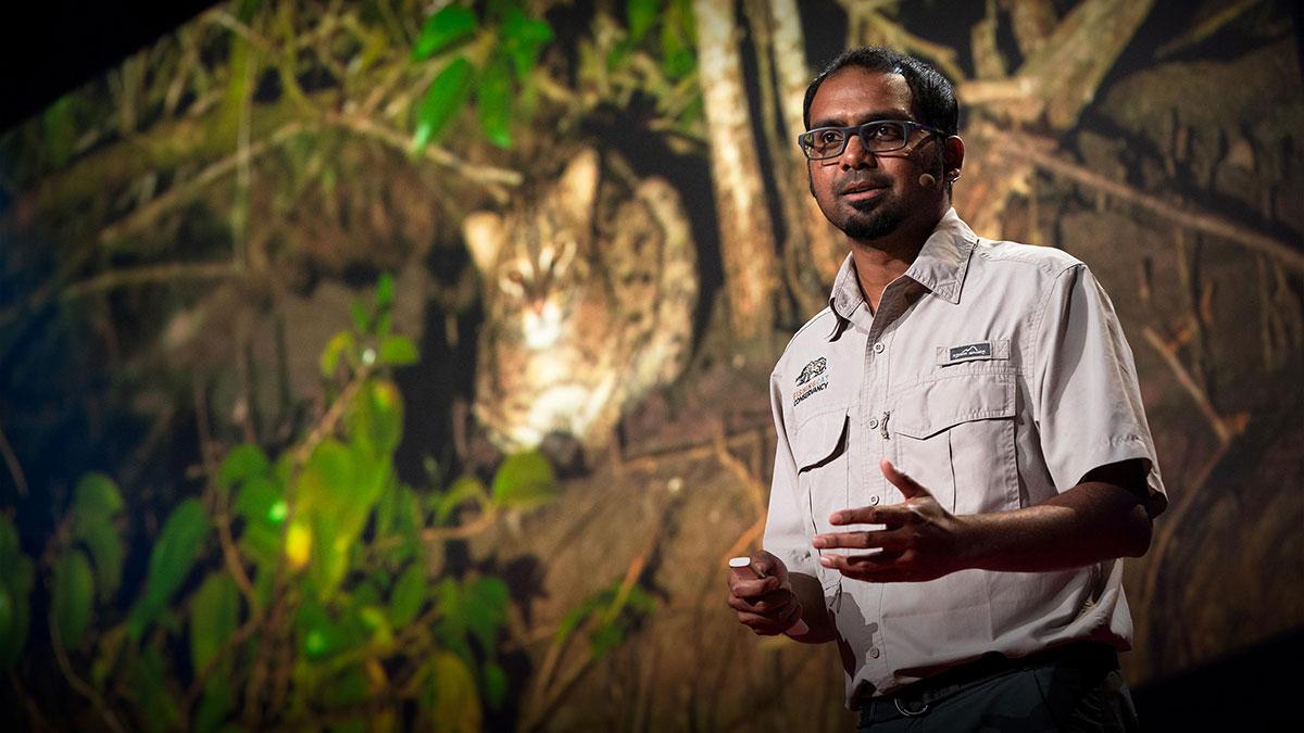 سخنرانی تد : ارتباط بین گربه های ماهیگیر و حفاظت از جنگل های مانگرو