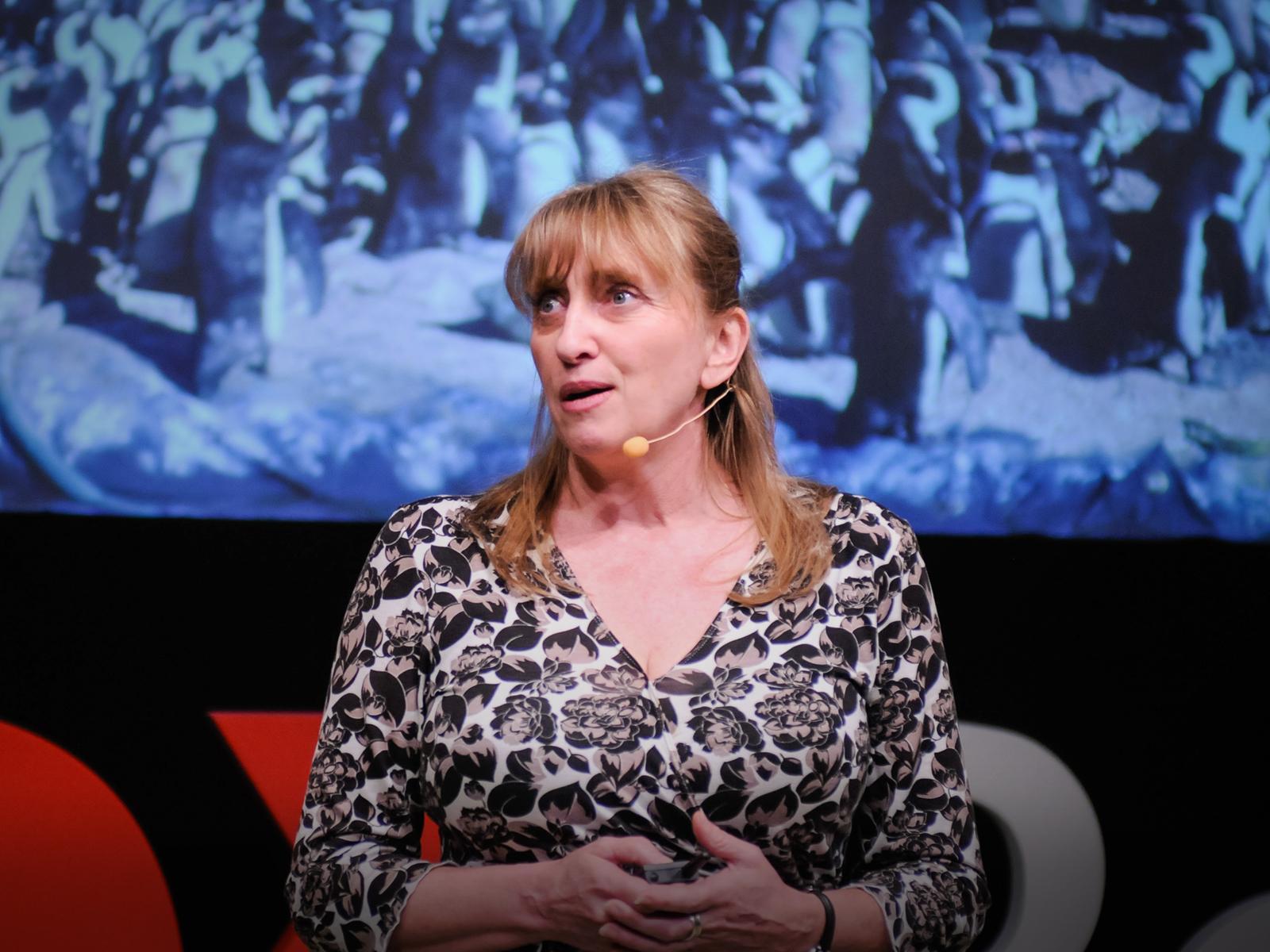 سخنرانی تد : دیانا دپلی: نجات بزرگ پنگوئن