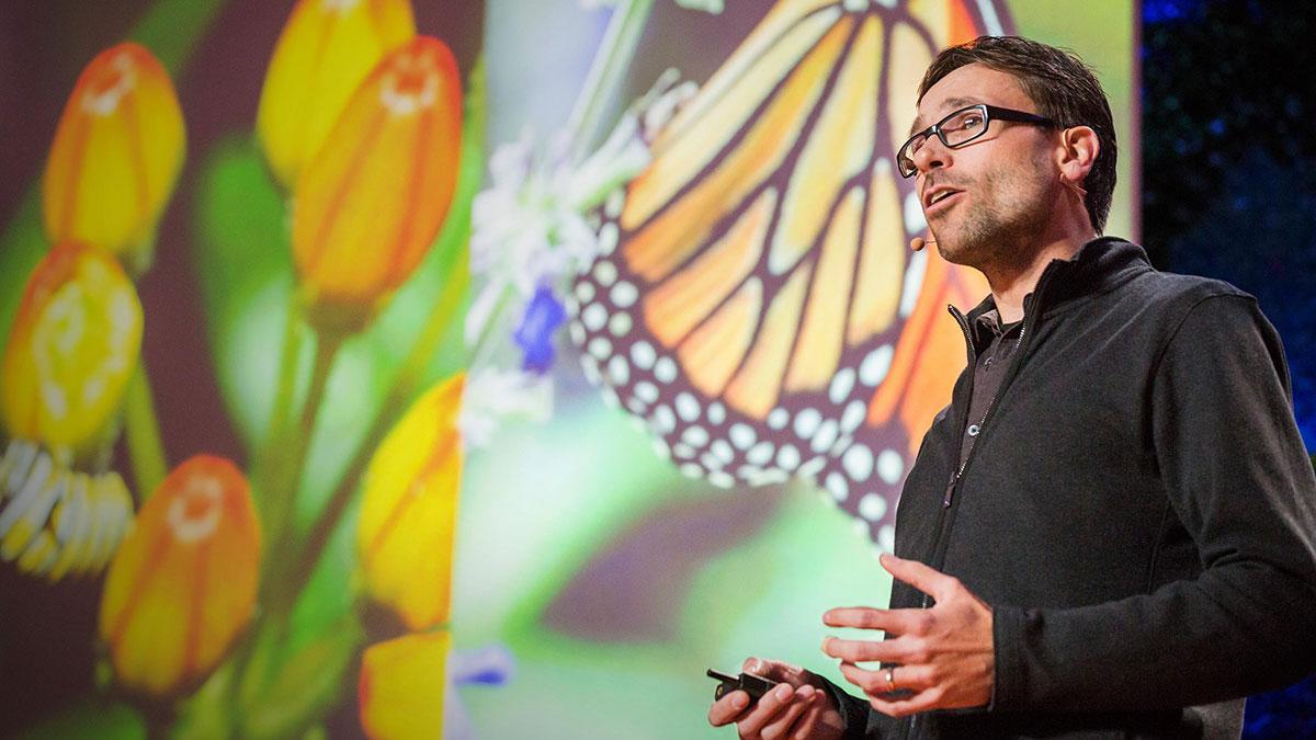 سخنرانی تد : نحوه خود درمانی پروانه ها
