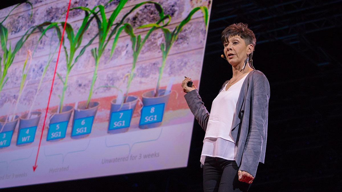 سخنرانی تد : چگونه میتوانیم محصولاتی تولید کنیم که بدون آب دوام آورند؟