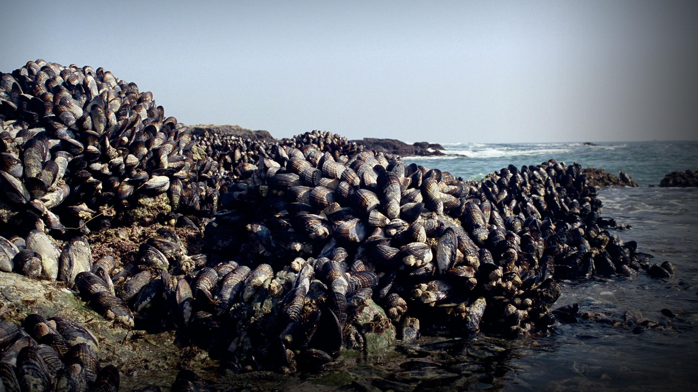 سخنرانی تد : آنچه که موجودات چسبنده دریایی برای ساخت چسب به ما میآموزند.