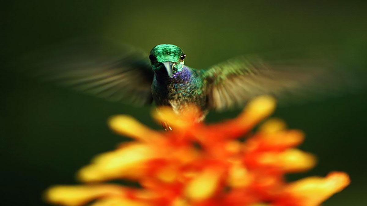 سخنرانی تد : لویی شوارتزبرگ : زیبایی پنهان گرده افشانی