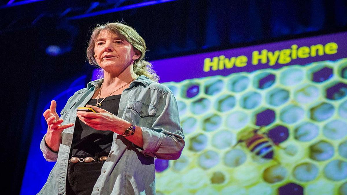 سخنرانی تد : چرا زنبورها در حال ناپدید شدن هستند؟