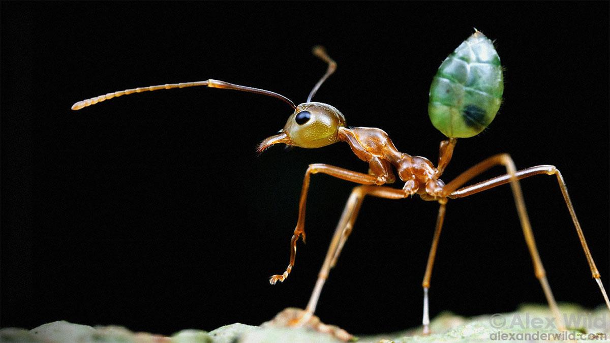 سخنرانی تد : ما از زندگیِ جنسی عجیب و غریب حشرات چه میاموزیم