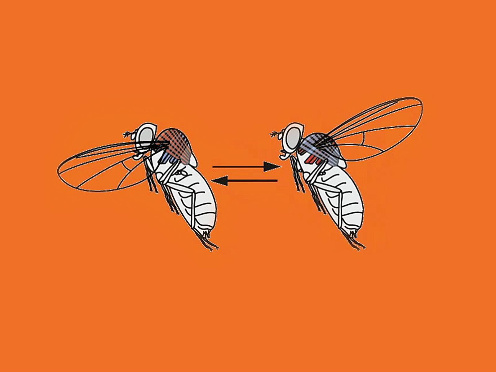 سخنرانی تد : مگسها چگونه پرواز میکنند؟