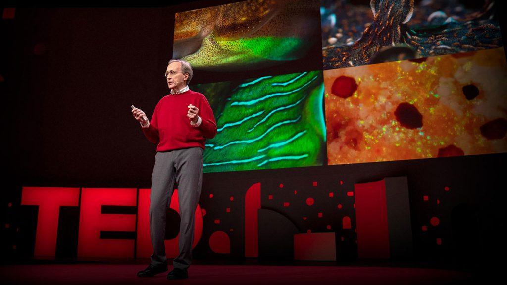 سخنرانی تد : مغزهای شگفتانگیز و پوست تغییرپذیر اختاپوس و دیگر سرپایان