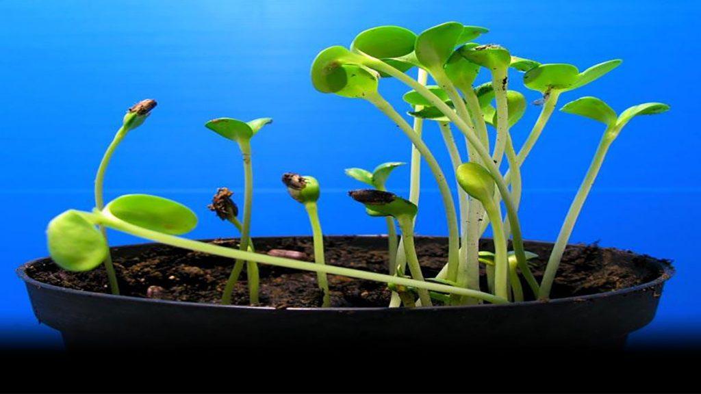 سخنرانی تد : استفان مانکوس: ریشههای هوش گیاهان