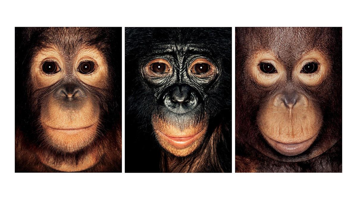 سخنرانی تد : شامپانزهها احساس و فکر دارند، پس باید ازحقوق لازم برخوردار شوند